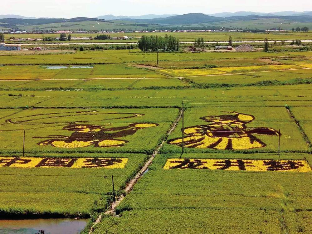 壁纸 草原 成片种植 风景 植物 种植基地 桌面 1000_750