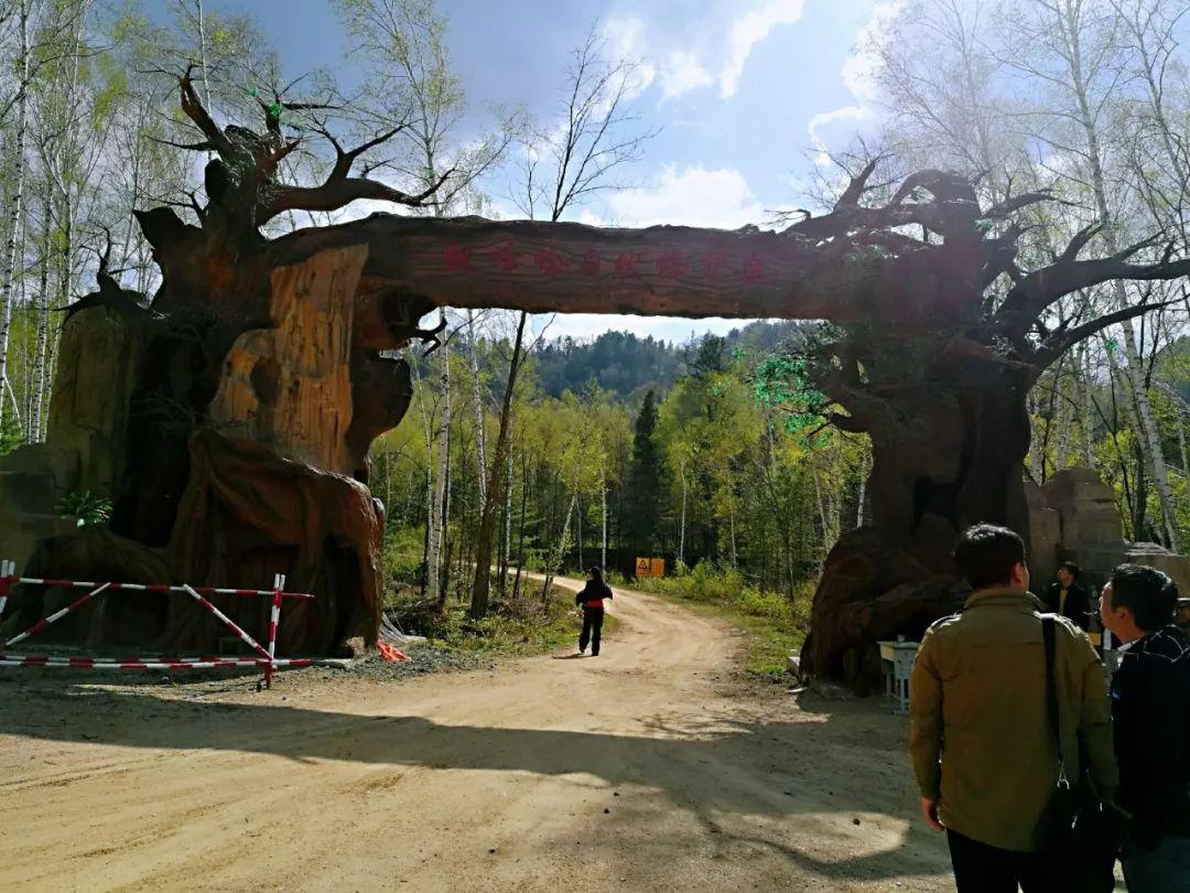 延边州内又一旅游新去处——紫杉王古树风景区